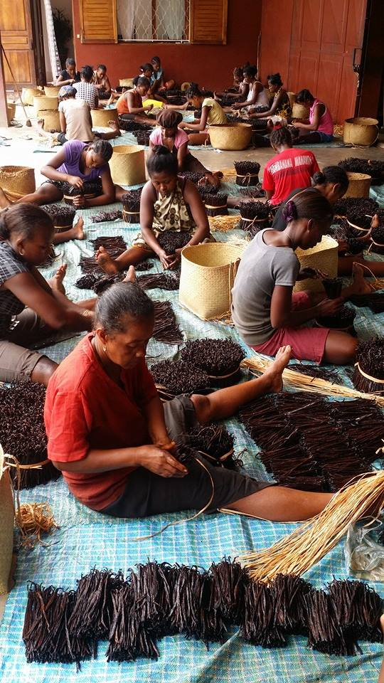 Vanilla bean supplier Madagascar