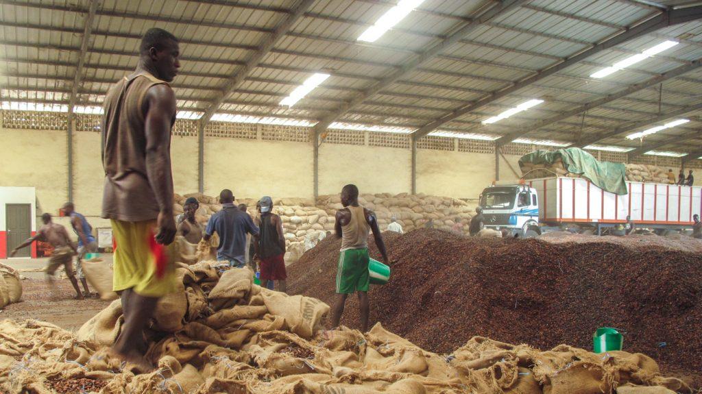 Madagascar : world's second largest clove exporter GEGM