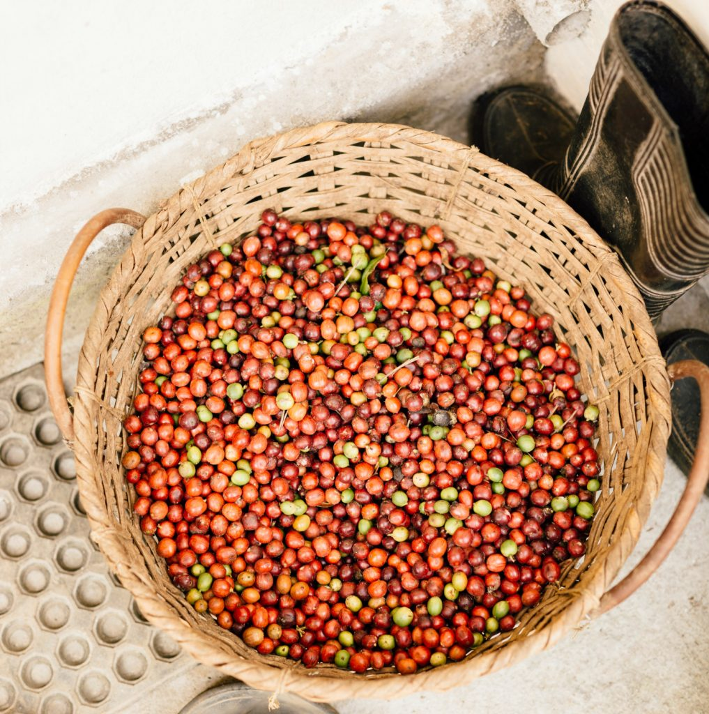 Black pepper and Light Berries : Madagascar increases its crop each year