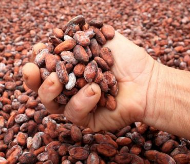 KASAVA: A project for a sustainable cocoa industry Madagascar