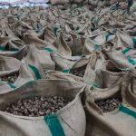 raw cashew nut supplier